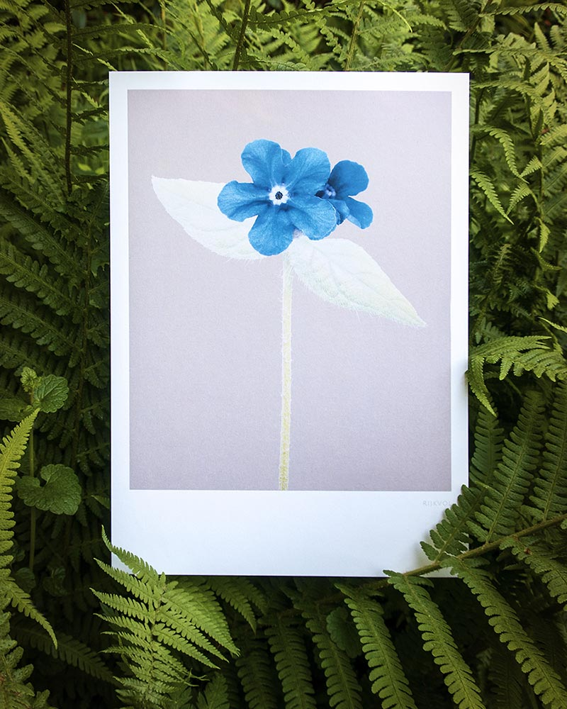 Luxe A4 Print, Forget-Me-Not