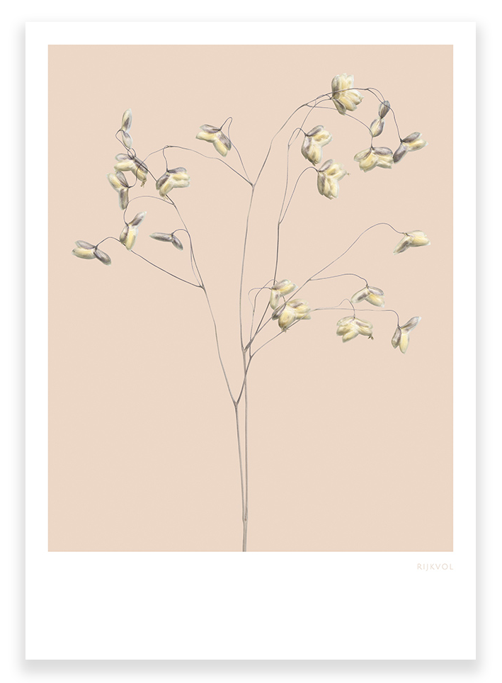 Grasses 01, luxe A4 print